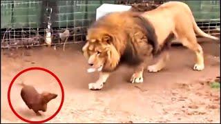 Lanzarón A Un Perro Dentro de la Jaula del Leon No Creeras lo que Ocurrio Despues