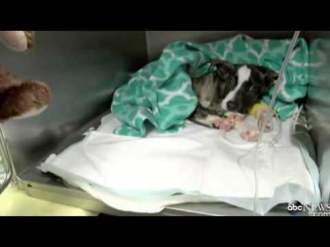 Puppy Found Beaten, Buried Alive in Georgia Gets 2nd Chance at Life