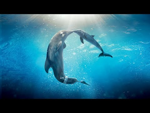 Healing songs of Dolphins & Whales  Deep Meditative Music for Harmony of Inner Peace