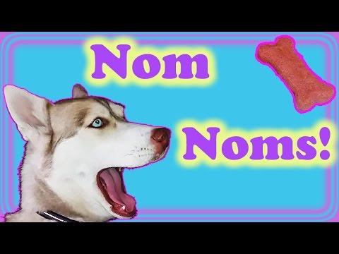 red-siberian-husky-:-naughty-nenya-wants-treats