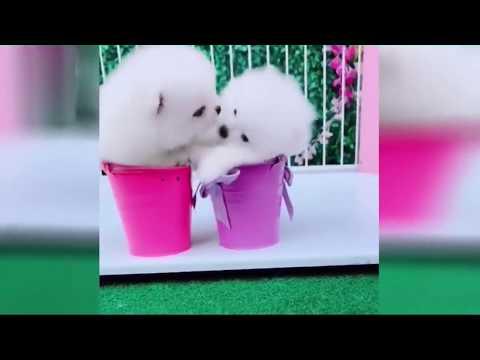 2019「絶対笑う」最高におもしろ犬,猫,動物のハプニング, 失敗画像集 #7