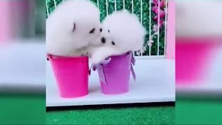 2019「絶対笑う」最高におもしろ犬猫動物のハプニング 失敗画像集 7