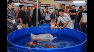 15th All Indonesia Koi Show 2018 - Short Highlight ( Nusatic 2018 )