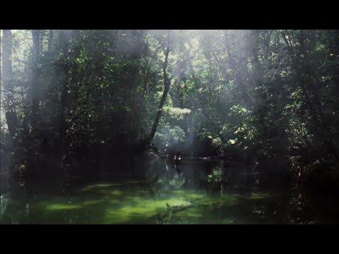 Borneo, les ravages du pouvoir