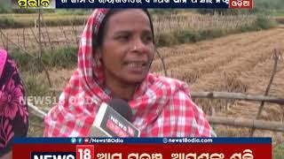 Cyclone Pethai: Cyclonic rains damage paddy across Odisha | News18 Odia