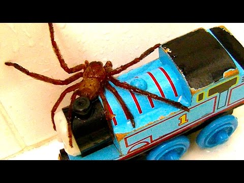 Thumbnail: Big Spider On The Bath Toys Dyson GoPro Cam Scary Video