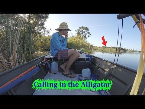 Solo Alligator Hunter In Florida