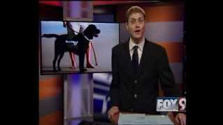 Ptsd Service Dogs For Veterans