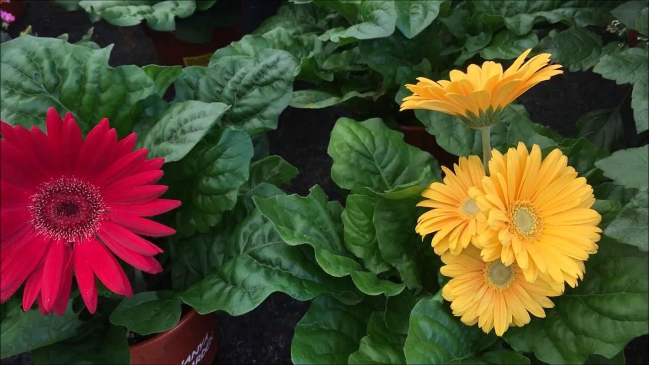 Beautiful Flowers In Nursery Singapore