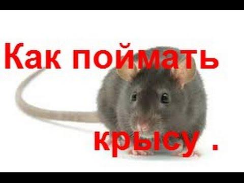 Крысоловка своими руками из бутылки фото 119