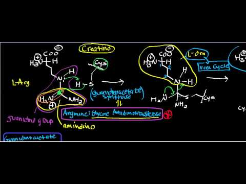 Creatine Physiology, Biosynthesis, and Organic Mechanism (Part 1) Gly Amidinotransferase; GANMT