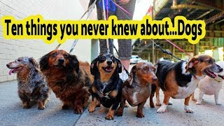 Ten Things You Never Knew About..Dogs