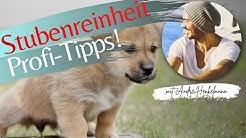 Stubenreinheit - Profi Tipps!
