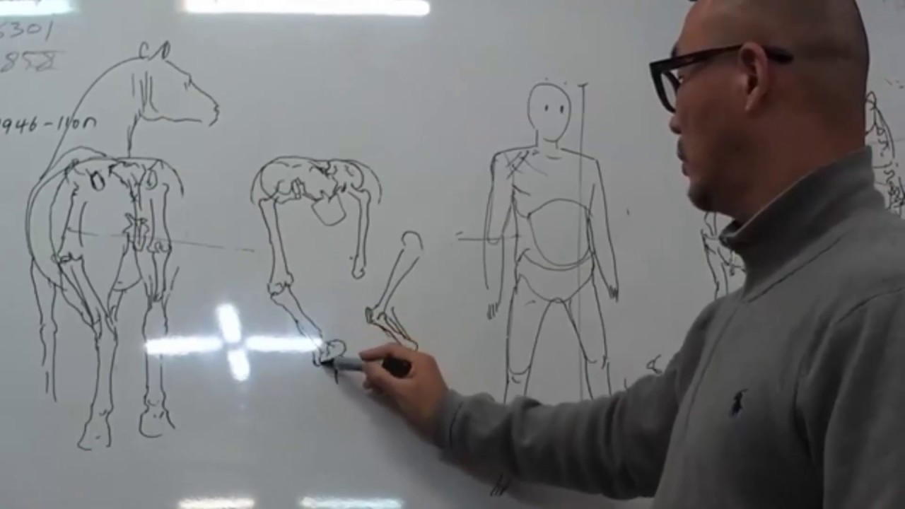 Lecture of anatomy and perspective Kim Jung Gi and Insang Hwang ...