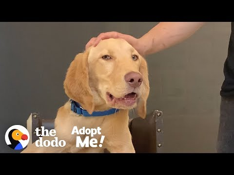 Puppy Who Eats In A High Chair Is Looking For His Forever Family | The Dodo Adopt Me!