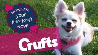 Do You Know A Dog And Human Who Share A Special Bond? | Eukanuba Friends For Life 2015
