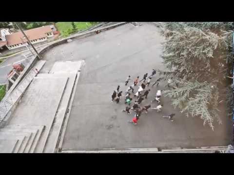ISIS  LipDub 2 con i Negrita dal vero! - A modo mio - Enrico Fermi  2012