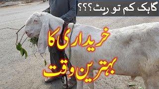 SUBHO KA RATE - Rajanpuri Goat - Makhi Cheena Goat - Bakra Mandi (2018) June - Ramzan Special