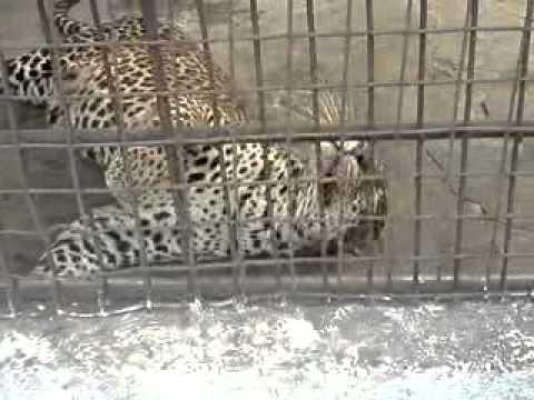 Kinshasa zoo mars 2012 youtube for Jardin zoologique kinshasa
