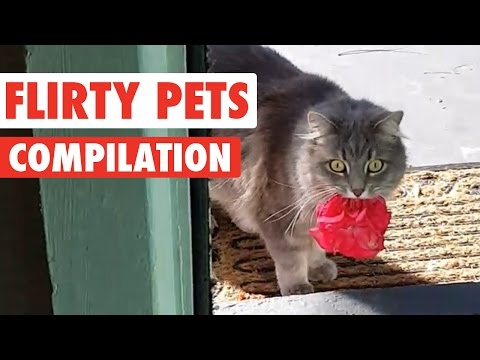 Flirty Pets Video Compilation 2016