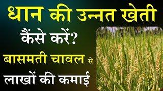 धान की खेती कैसे करें   Dhaan ki kheti in hindi   बासमती धान की खेती कैंसे करें  Smart Business Plus