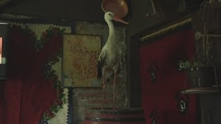 Stork settles for pub life after landlord saves him