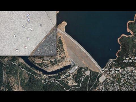 """Raining fish near Oroville Dam""   Sierra Rivers begin to rise as Mountains Melt!"
