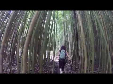 Maui Hiking - Bamboo Forest on the Pipiwai Trail in Haleakala National Park