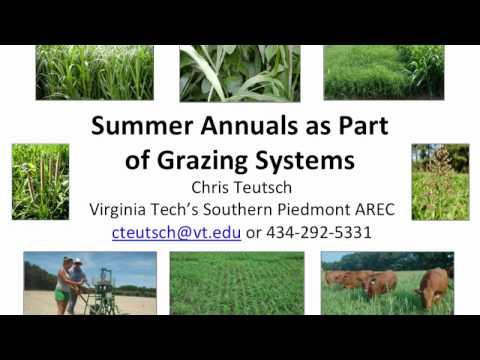 Summer Annuals as Part of Grazing Systems-Chris Teutsch