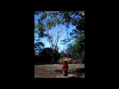 D-9 Caterpillar Bulldozer Downs Albizia Tree, Hawaiian Paradise Park, Puna, Hawaii