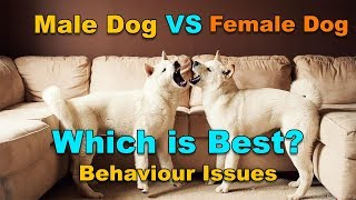 Male Vs Female Dog Behaviour Issues : Which Is Best? : TUC