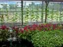 roof garden hydroponics aquaponics 全球暖化 都市熱島效應  節水生產 綠建築 暖化