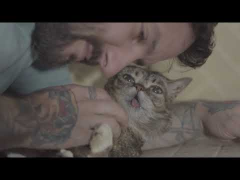 Scratches, Kisses, and Purrs with Lil BUB