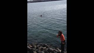 Cardinals fan jumps in the bay to rescue Giants  fan game tickets, at Jack London Square Ferry! 2014