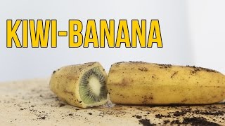 Cómo hacer crecer un kiwi dentro de una banana - BANIWI