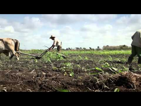 With Watermelon Farming It Takes 100 Days To Grow Ksh40,000 To Ksh400,000