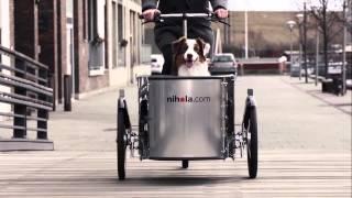 nihola Dog