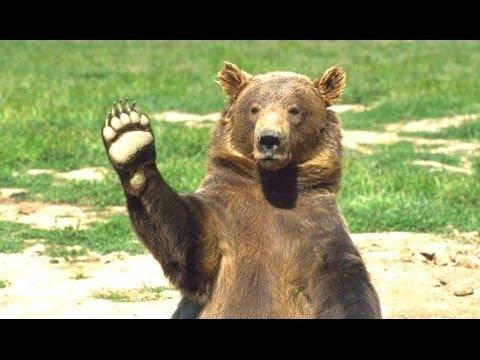 Мультфильмы про медведей и мишек смотреть онлайн