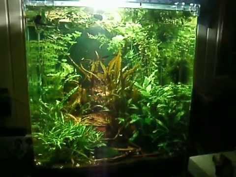 aquaflow technology aif 411m unterwasser aquariumsfilterpumpe f r frisch und salzwasser f r. Black Bedroom Furniture Sets. Home Design Ideas