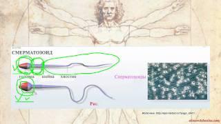 Методы Распознавания Плодности (МРП).Урок3 Часть1