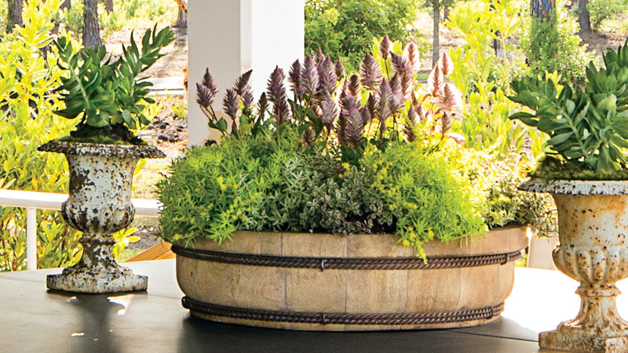 Shade Plant Container Ideas