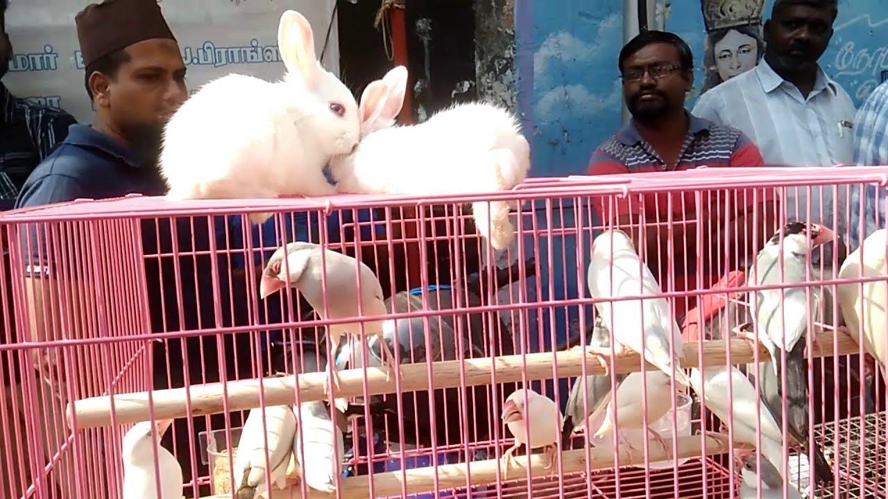 Pet Market @ Parrys Corner