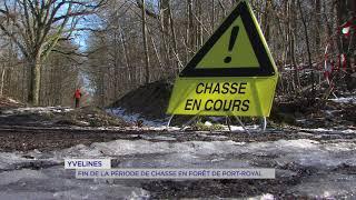Yvelines : fin de la période de chasse en forêt de Port-Royal