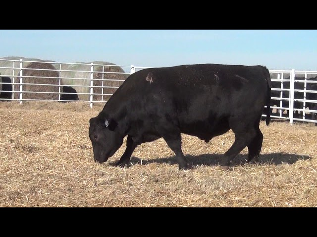 Express Ranches Lot 351
