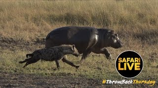 #ThrowbackThursday: North Clan Hunts Baby Hippo