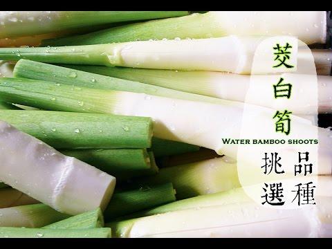 【秋】茭白筍如何挑選才好吃