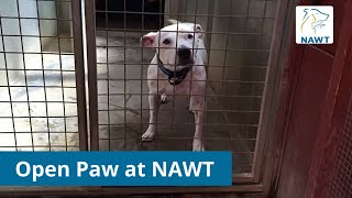 First Uk Pilot Of Open Paw Starts For Rescue Dogs At Nawt