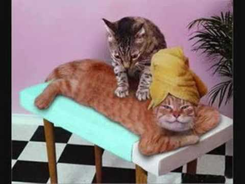 Dr le d 39 animaux youtube - Videos droles d animaux ...