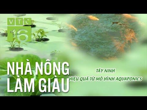 Công Nghệ Aquaponics -  Một Sự Kết Hợp Hoàn Hảo | VTC16