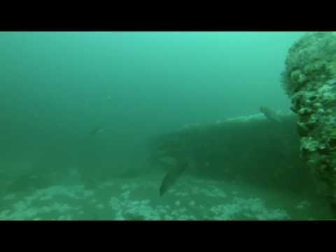 Offshore New Jersey Wreck, Blackfish, Porgies, Bergals and Sea Bass